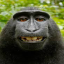Minecraft Server icon for Monkey Anarchy